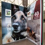 DM75 The Fearless - Exhibition showing Dickin Medal Recipients, Afghanistan Dogs Mali And Lucca