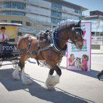 PDSA horse and cart at Petlife