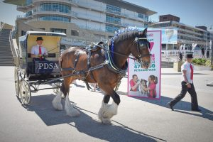 PDSA horse and cart at Petlife