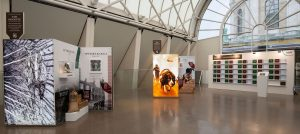 DM75 The Resloute - Exhibition Showing Dickin Medal Recipients, Warhorses Reckless, Upstart, Olga and The Diligent - Afghanistan Dog Theo